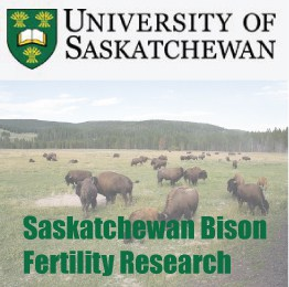 Saskatchewan Bison Fertility Research